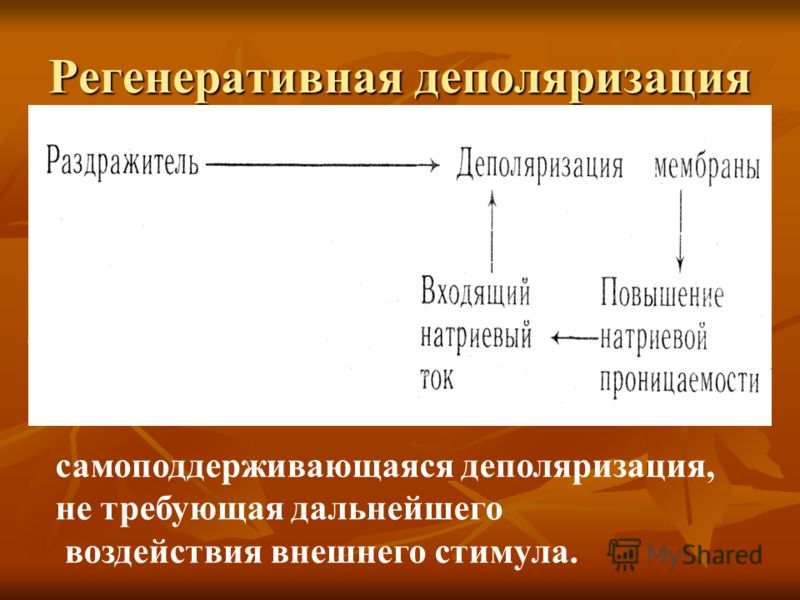 Suurenenud liige ja potentsiaal Liikme laiendamise simulaator