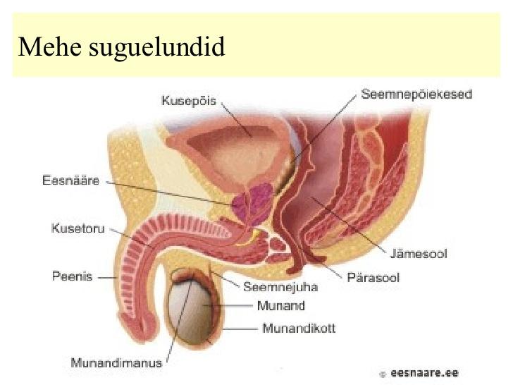 Harjutused meeste munn suurendamiseks Mis on soo normaalne suurus