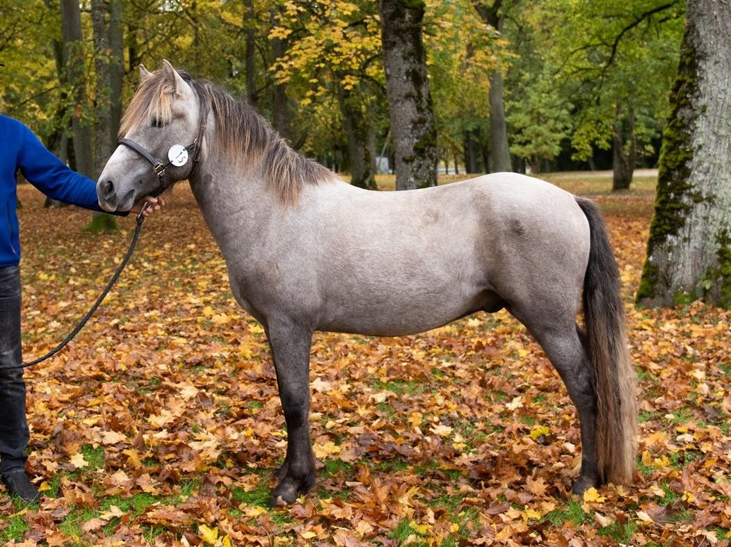 Hobuste liikmete suurused Kuidas suurendada seksuaalset liikme massaazi