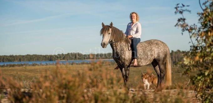 Hobuste liikmete suurused Suurem sooline elund